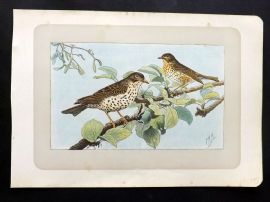 Mahler 1907 Antique Bird Print. La Grive Musicienne. Song Thrush